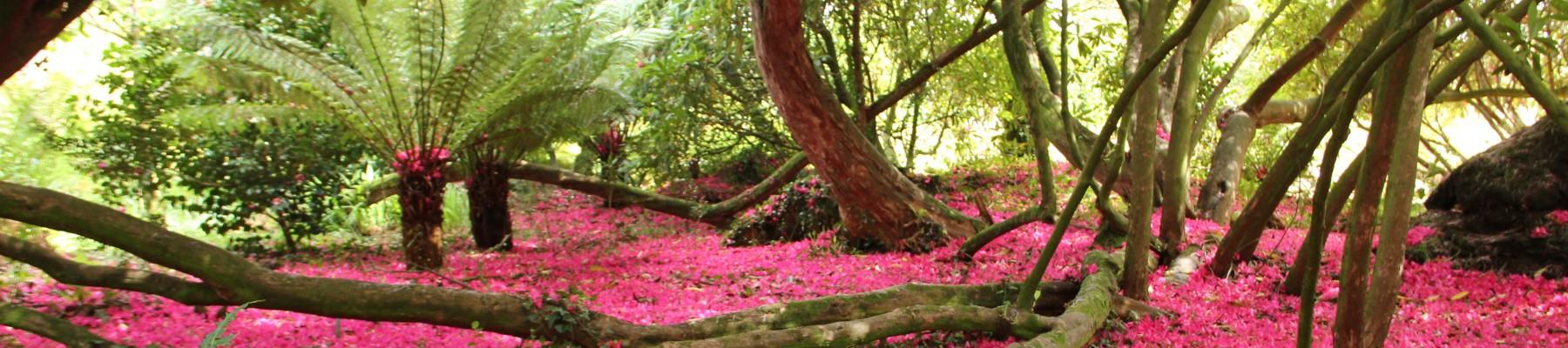 Societé d'Horticulture de la Gironde